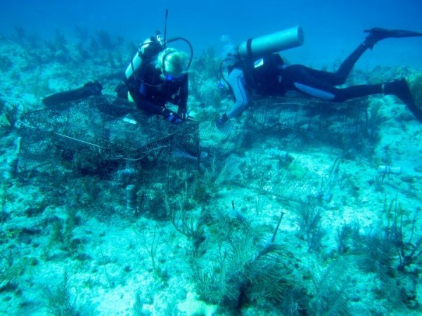 Isolated Coral Reefs Far from Human Activity Are Not Healthier