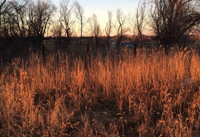 Wet Winters May Not Dampen Small Wildfires