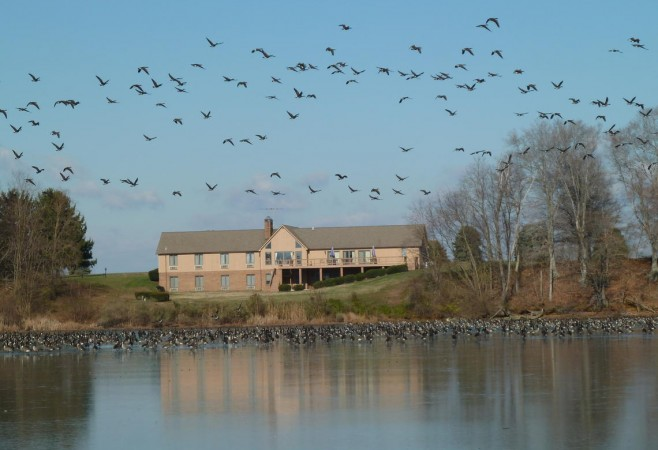 USGS: Waterbirds at Risk in Chesapeake Bay