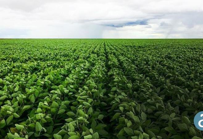Drones Aid Precision Agriculture in Brazil