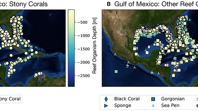 Gulf Coast Corals Face Catastrophe