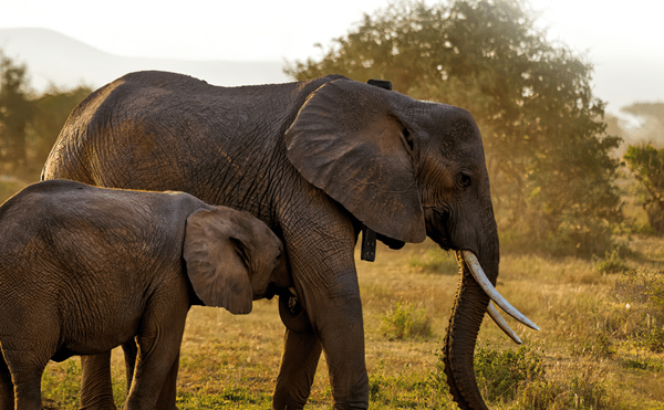 Africa Wildlife Tracking Uses Satellite Technology to Support Conservation Efforts