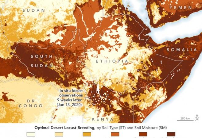 Soil Data Aids Prediction of Locust Swarms