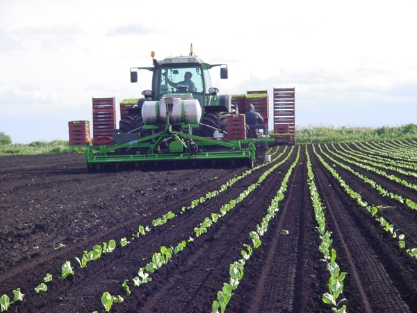 UK Autopilot Fendt Lettuce WEB